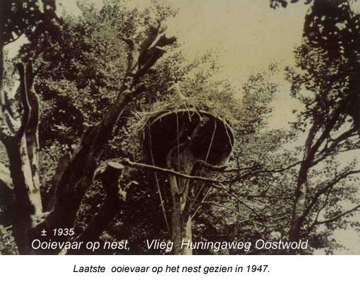 Ooievaarsnest boerderij Vlieg Oostwold met tekst